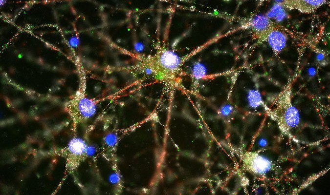 Genetic Study Provides First Ever Insight Into Biological Origin Of Schizophrenia