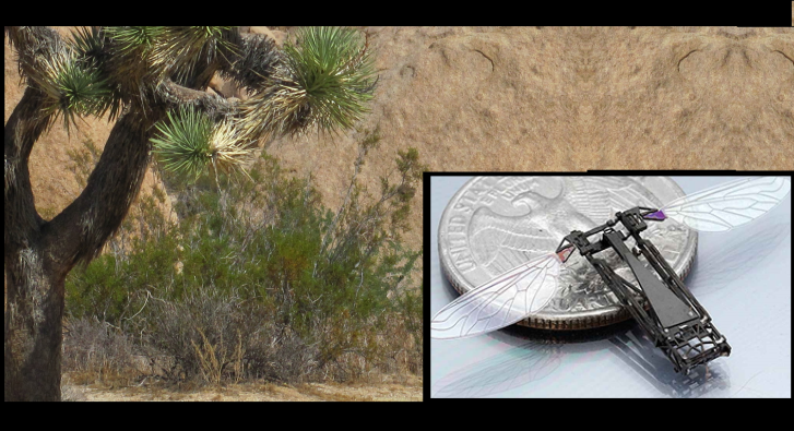 Desert Shrubbery: Only Natural Thing Known to Destroy a Cicada Microdrone