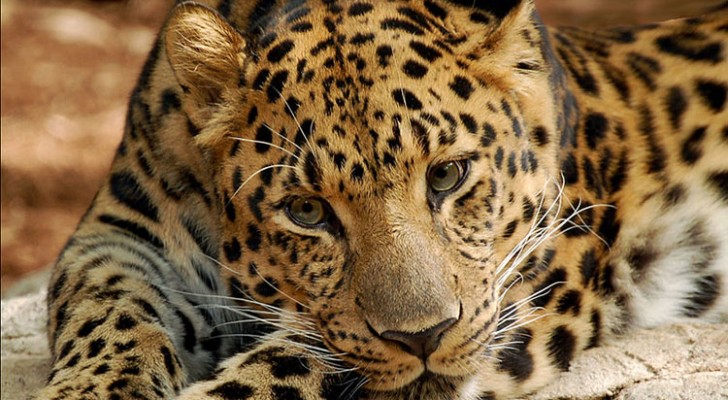 10 Animals That We're About To Lose Forever Unless We Make An Effort To Protect Them