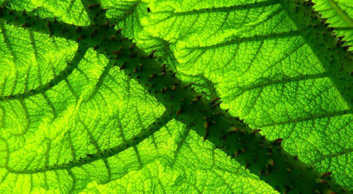 Scientists Witness Eye-Opening Effects Of 'QI Energy' On Plant DNA & Cellular Growth