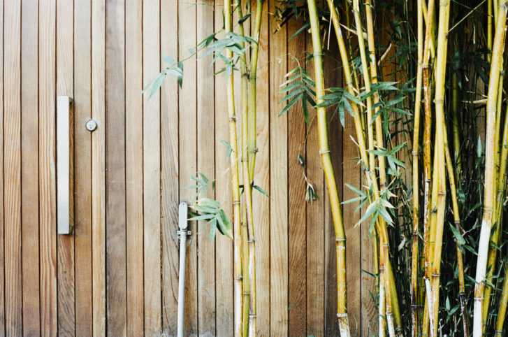 Bamboo – Some Uses and Facts