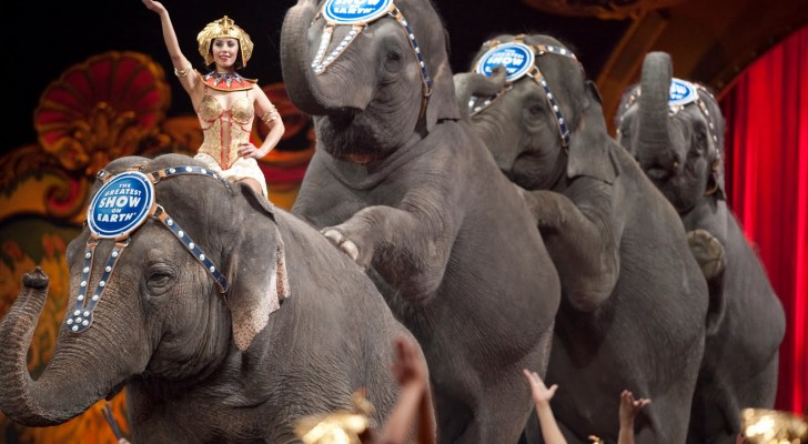 Victory! Ringling Brothers To Phase Out Elephant Acts By 2018 Due To Concern For Animal Welfare