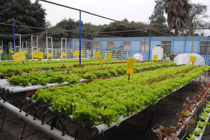 Simplified Hydroponics in Urban Agriculture