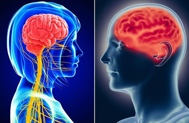 Gender Myth Busted: Study Shows No Such Thing As Male & Female Brains