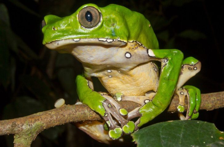 Kambo: Can Poison From A Frog Fix Your Health Challenges?