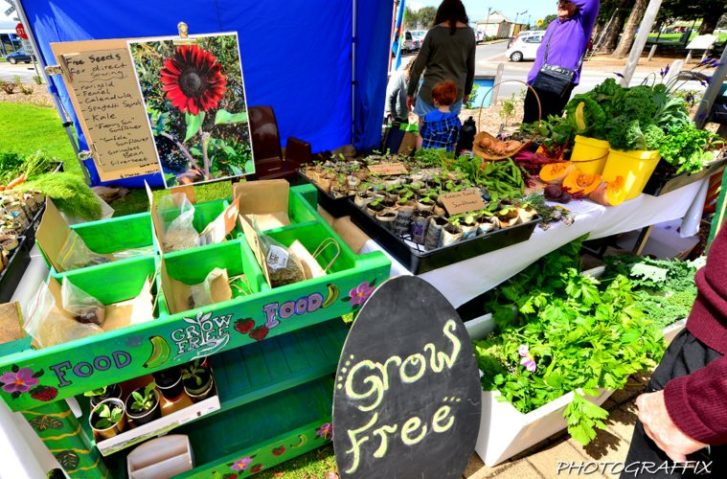 What Happens When You Grow More Produce Than You Can Eat? Well, Give It Away Of Course!