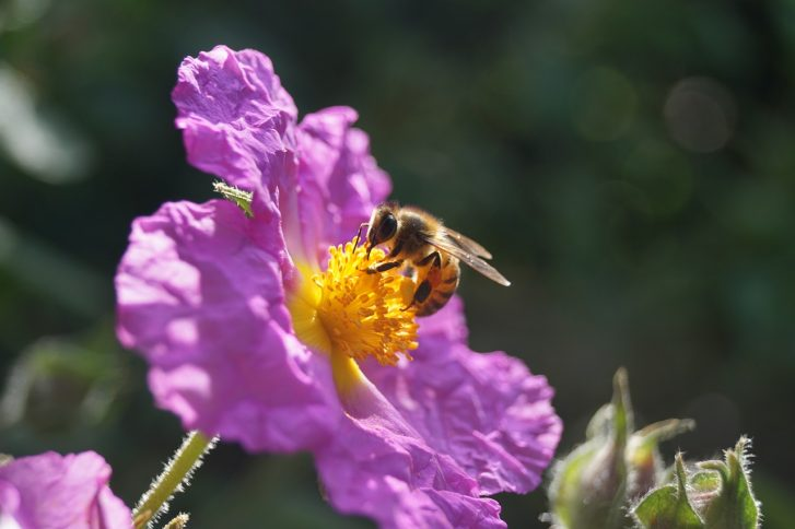 After Years of Decline, Finally Some Good News About America's Honey Bees