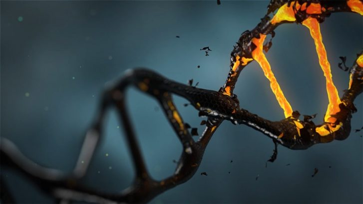 Scientists Discover that CoQ10 can Program Cancer Cells to Self-Destruct
