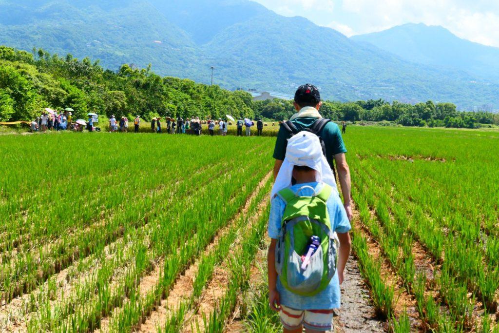 北投種稻體驗活動回味早年農耕生活。