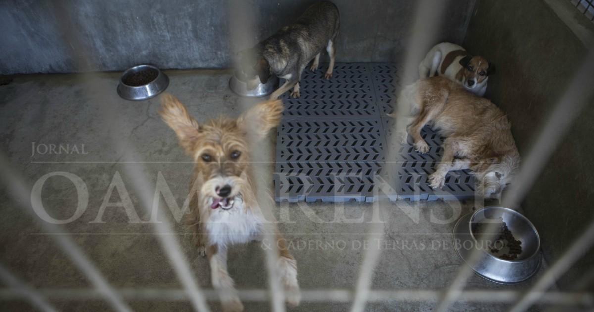 PAÍS - Entra este domingo em vigor a lei que proíbe o abate de animais nos canis municipais