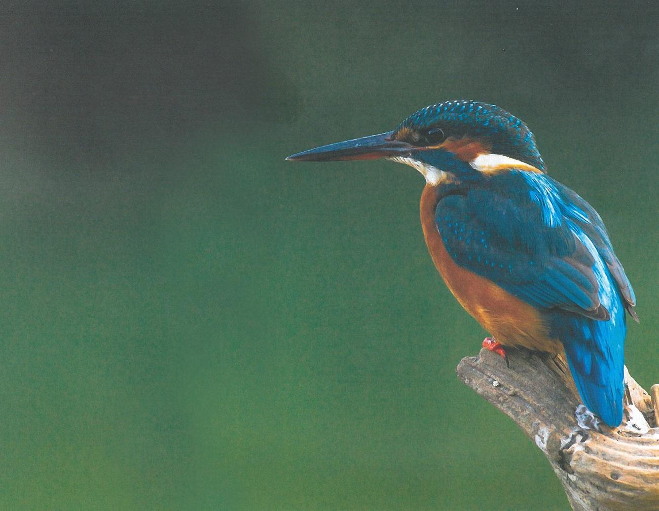 CULTURA - Fauna do PNPG em fotografia no Museu da Imagem até 27 de Janeiro