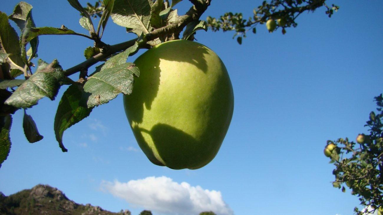 AMBIENTE –  Iniciativa para promover as variedades regionais de macieiras do Gerês