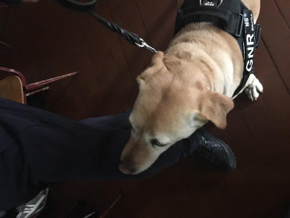 AMARES –  Alunas de Turismo levaram cães da GNR à escola