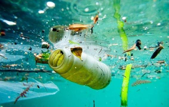 MUNDO - Ingerimos até cinco gramas de plástico por semana, o equivalente a um cartão multibanco