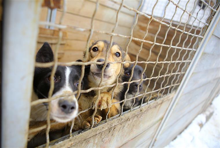 BRAGA – Centro de Recolha Oficial de Animais de Braga abre portas a visitas este sábado