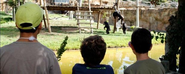 AMARES – PAN contra possível criação de zoo em Amares