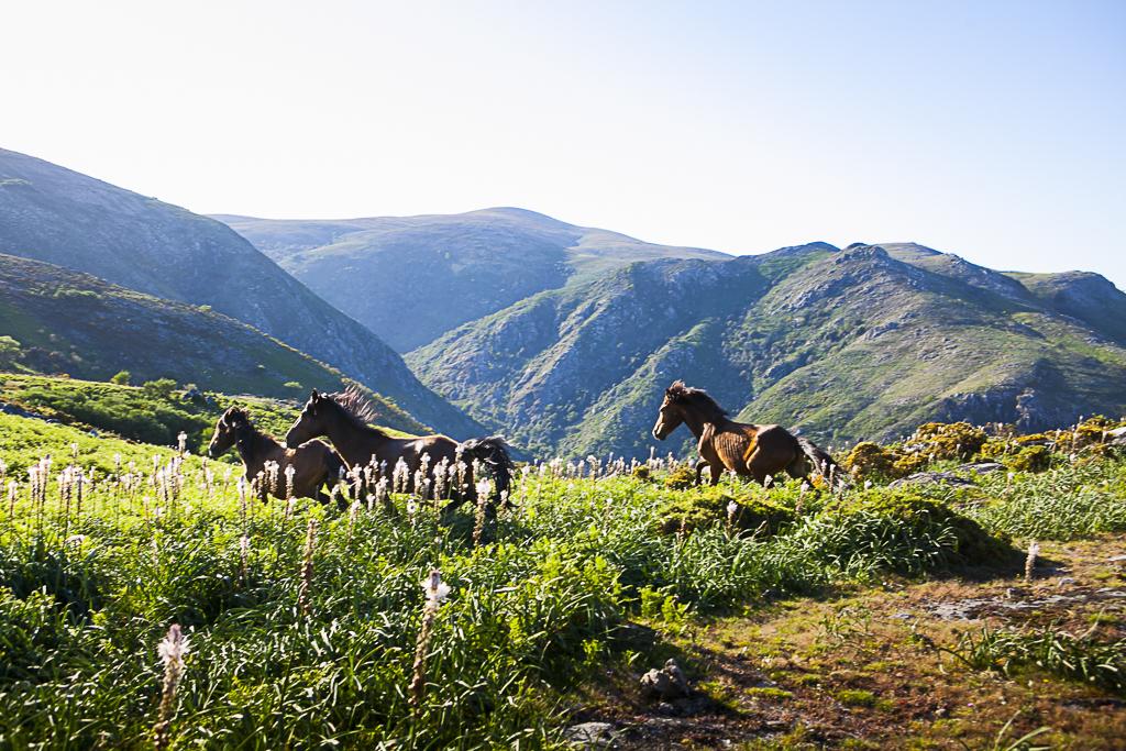 REGIÃO – Congresso alerta para o «envelhecimento profundo» da população do Parque Nacional da Peneda-Gerês