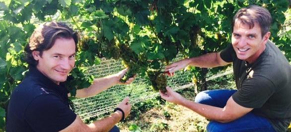 Une virée dans les vignes en Virginie
