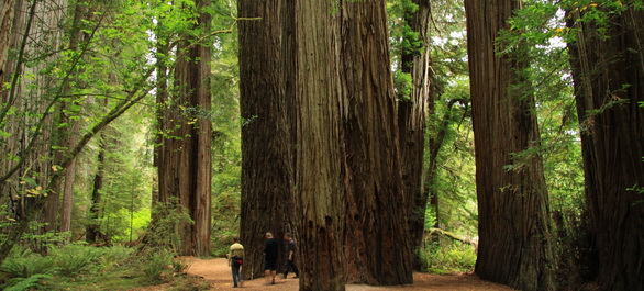 Redwood Coast, entre rivages, villages et sequoias