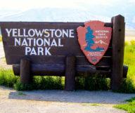 Un weekend dans le parc de Yellowstone