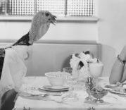 feter-thanksgiving-etats-unis-tradition-dinde-farcie-diapo1