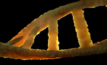DNA may contain Causes of Attention Deficit Disorder