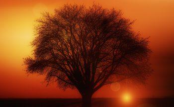 Tree, sunset, Jon Kabat Zinn; a combo from heaven?