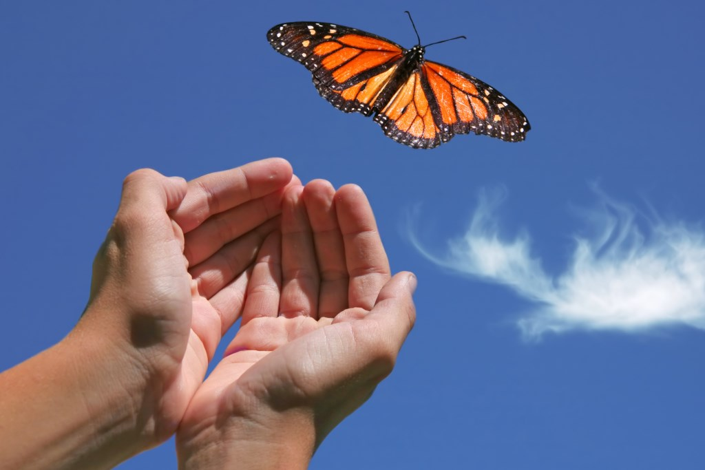 Compassion Hands Releasing Butterfly