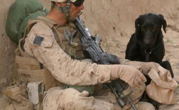 Taming the beast of combat trauma