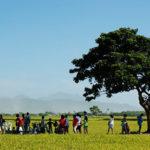 「沒有稻田,就沒有金城武樹」 農委會加碼16億元收購公糧