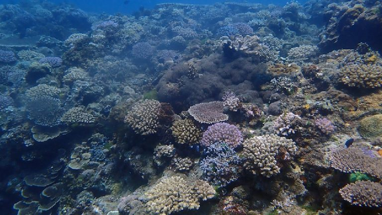 feature-news-environment-check-up-result-of-coral-reef-in-taiwan