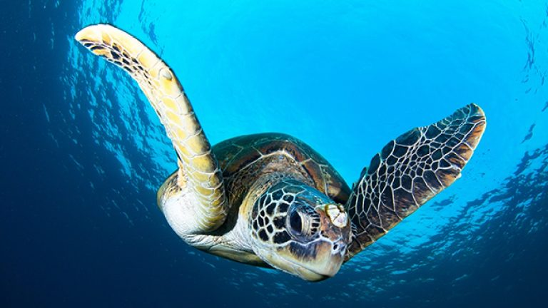 news-environment-kenting-sea-turtle