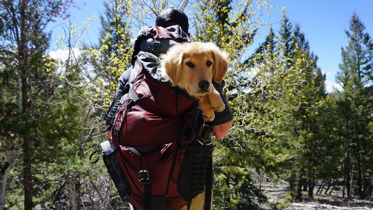 feature-dogs-mountain-climbing-knowledge