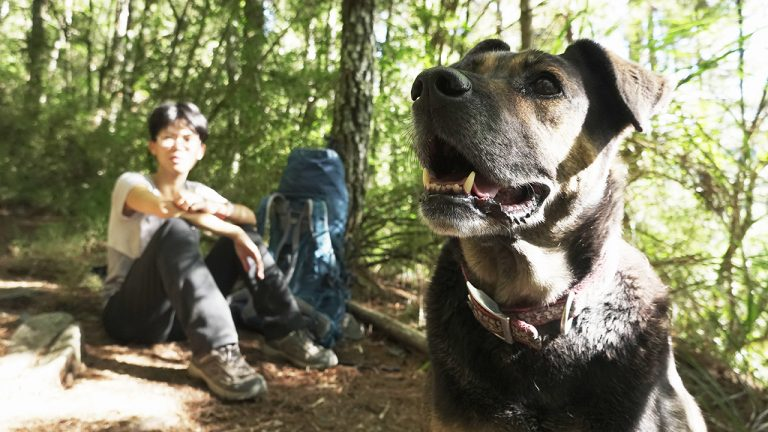 feature-dogs-mountain-climbing-rules