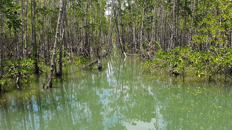 feature-news-environment-philippine-mangroves