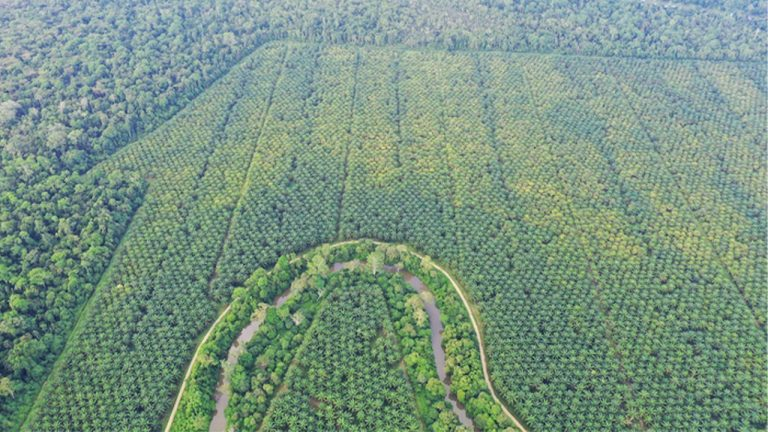 feature-news-environment-malaysia-forest
