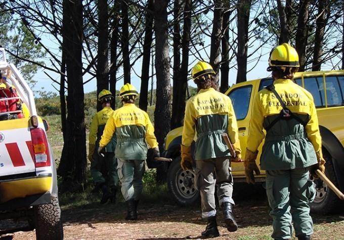 OPORTUNIDADEAssociação Florestal do Cávado tem seis vagas para sapadores