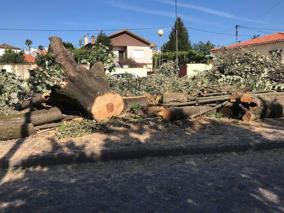 VILA DE PRADO –  Bloco de Esquerda quer que Vilela peça desculpa pelo abate de árvores