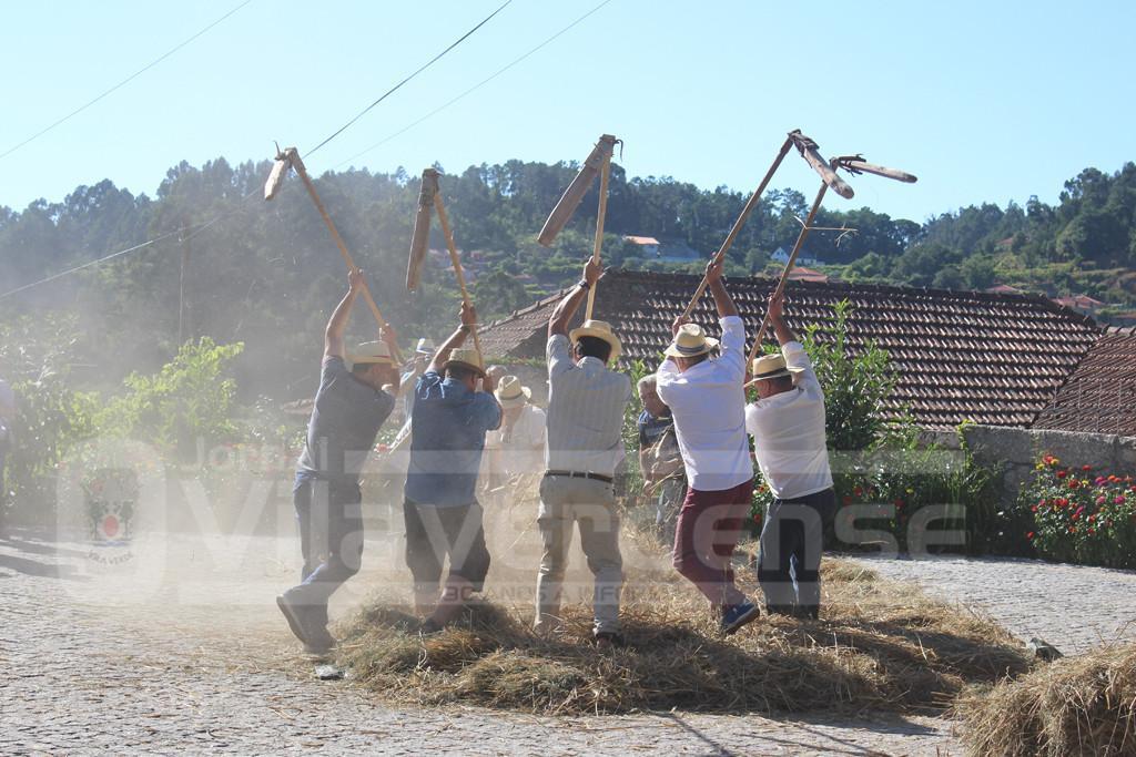 ROTA DAS COLHEITAS –  Aboim da Nóbrega recriou malhada de centeio à moda antiga