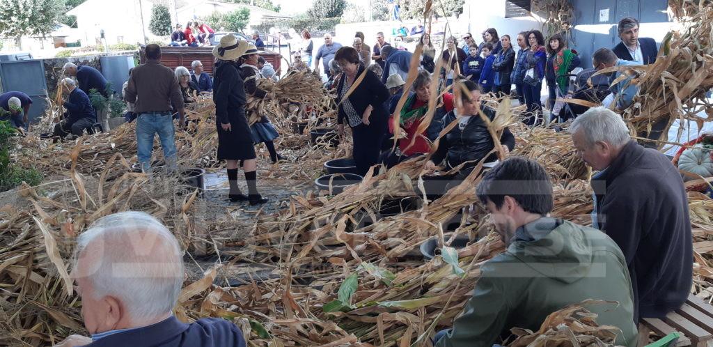 """SOUTELO (Vila Verde): Cantigas populares e muita animação dão """"brilho"""" à """"desfolhada tradicional"""""""
