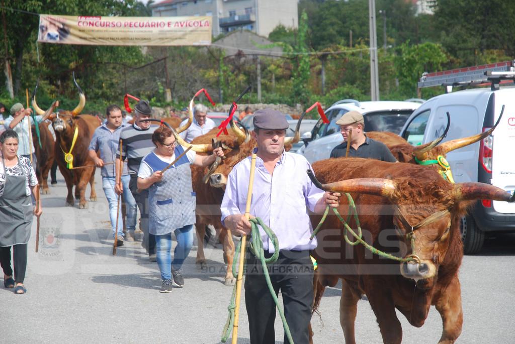 FESTA DAS COLHEITAS - Desfile de animais muito concorrido