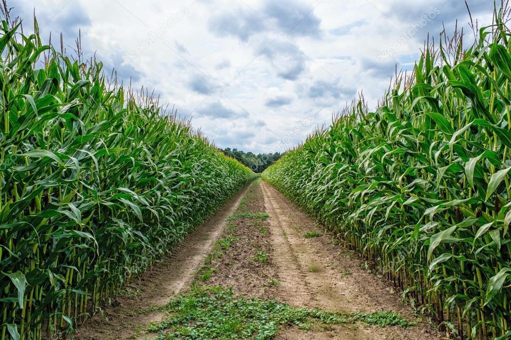 VILA VERDE - CAVIVER E CONFAGRI promovem sessões de divulgação sobre apoios ao rendimento agrícola