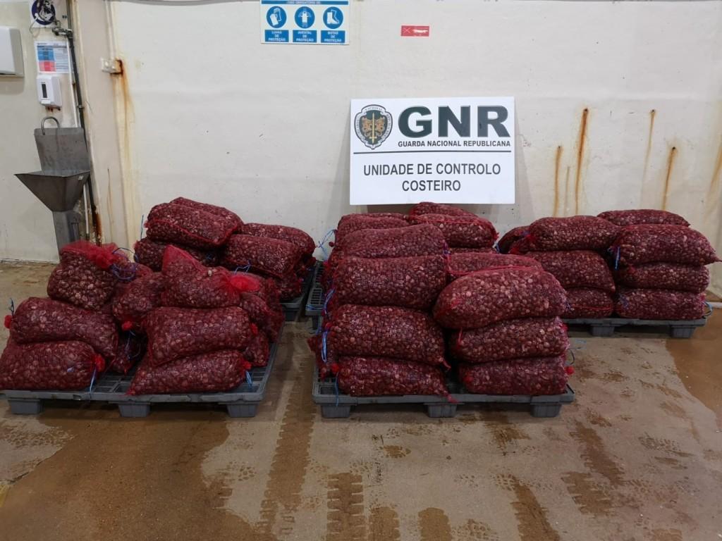 REGIÃO – GNR de Valença apreende quase duas toneladas de amêijoa-japonesa