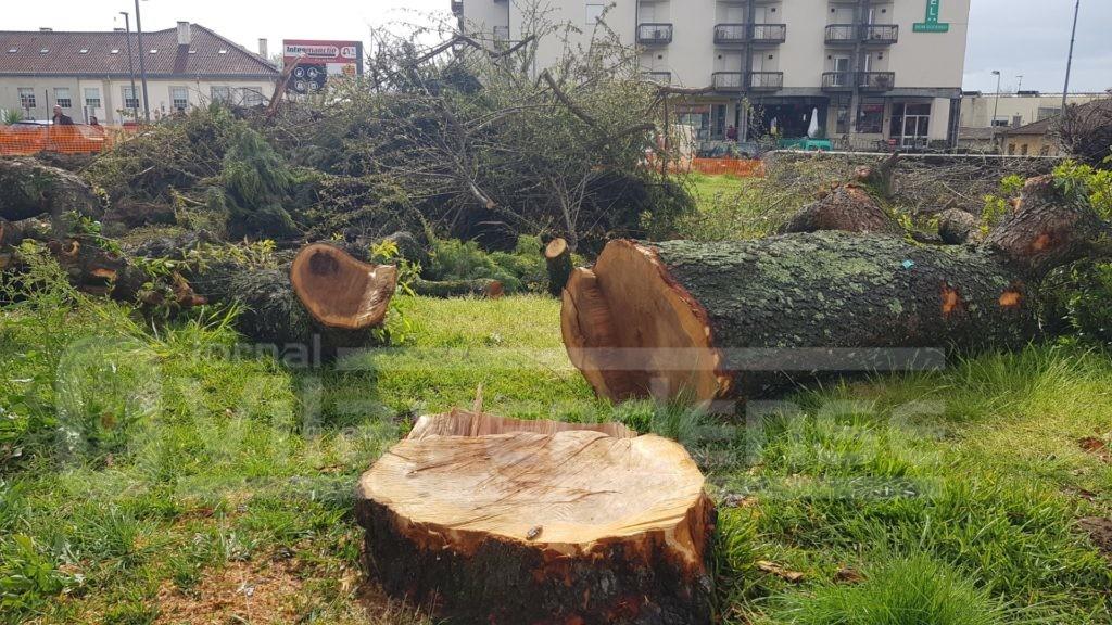VILA VERDE - José Morais classifica corte de árvores no Largo Antunes Lima como um «crime ambiental»