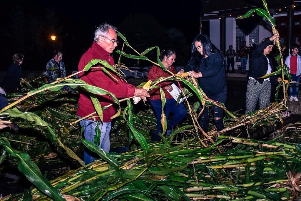 ROTA DAS COLHEITAS –Parada de Gatim promove desfolhada minhota no sábado