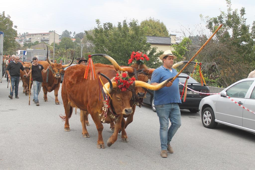 FESTA DAS COLHEITAS – Animais desfilaram pelo centro de Vila Verde