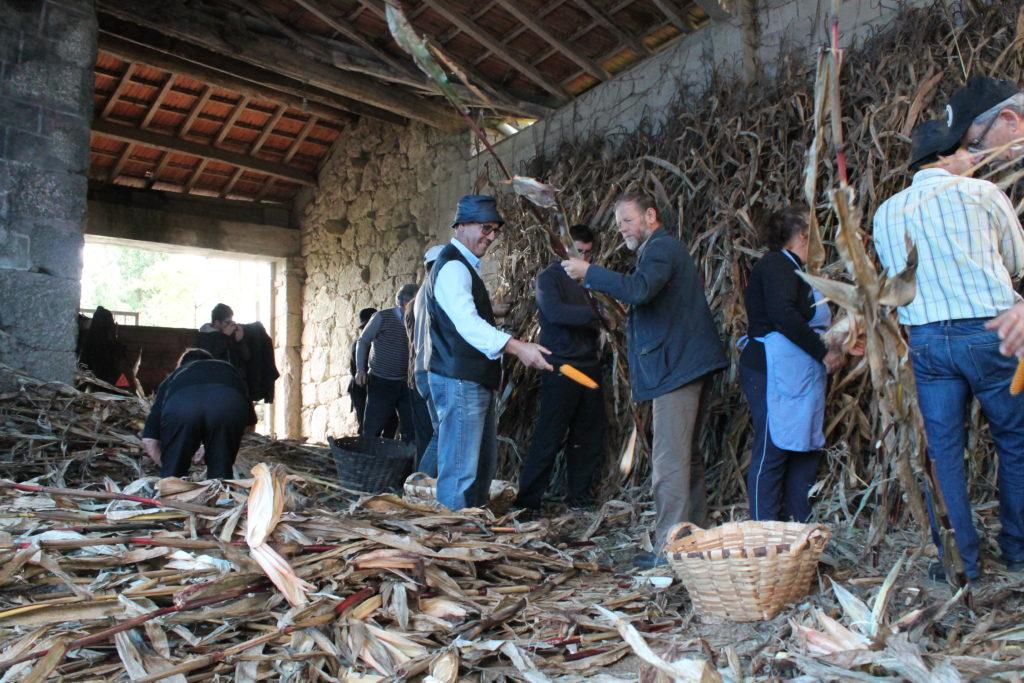 VILA VERDE - Desfolhada e Malhada do Milho geraram convívio e lembraram tradição em Oriz São Miguel