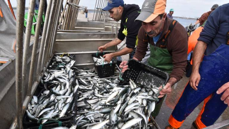 NACIONAL - Pesca da sardinha proibida a partir de sábado
