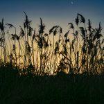 silhouette, grass, sunset