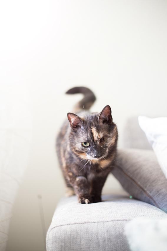 Hertta2, PESU ry:ltä kodin löytänyt kissa